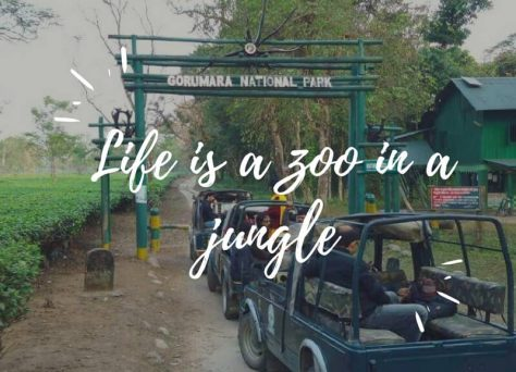 Life is a zoo in a jungle