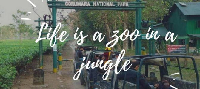 Gorumara Jungle Safari